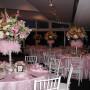 Pink Vine Organdy